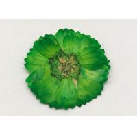 Quality Dye Green Dried Flowers , Dried Daisy Flowers For Epoxy Recycled Flowers wholesale