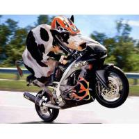 China Motorcycle GM110A/Dirt Bike/Pit Bike on sale