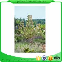 Quality Straight Garden Bamboo Stakes For Thick Bamboo Fencing 40 X 150cm wholesale