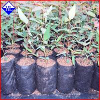 Quality Non Woven Weed Control Fabric Material , Polypropylene Landscape Fabric wholesale
