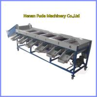 China onion sorting machine, onion grading machine on sale