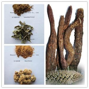 Quality Cistanche tubulosa Extract, Epimedium Breviconum Extract Icariin 10%20% wholesale