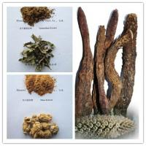 Quality Cistanche tubulosa Extract , Epimedium Breviconum  Extract , MACA P.E. men's health wholesale