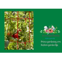 Quality Powder Coated Steel Tomato Plant Stakes / Support For Tomato Plants wholesale