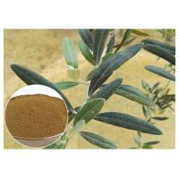 Quality Anti Oxidation Natural Olive Leaf Extract Hydroxytyrosol 20% Solvent In Water wholesale
