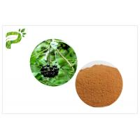 Quality Siberian Ginseng Powdered Herbal Extracts Acanthopanax Senticosus Eleutheroside B/E wholesale