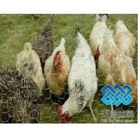 Quality poultry netting wholesale