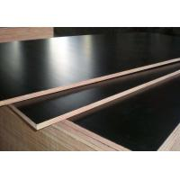 Quality Black Color Phenolic Film Faced Plywood 12mm - 18mm Thickness Environmental Friendly wholesale