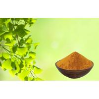 China Skin Care Ginkgo Biloba Extract Powder For Relieving Eye Fatigue on sale