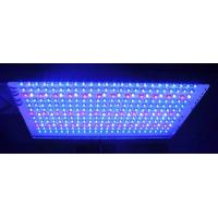 Quality Agricultural LED Plant Growing Lights  for indoor plants with 600 watt / 120 watt high power wholesale