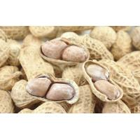 Quality Spiced Peanut Microwave Baking Equipment wholesale