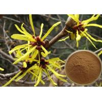 Quality Antipruritic Tannin Hamamelis Virginiana Extract , Witch Hazel Extract For Hair Color Protection wholesale