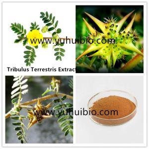 China Tribulus terrestris Extract,furostanolic saponins,saponin supplements,tribulus 90% saponin on sale