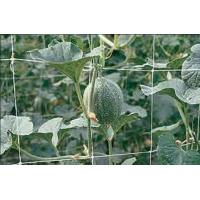Buy cheap Climbing Plant Support Netting Green / White For Greenhouse , Garden product