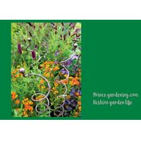 Quality Decorative Mental Garden Plant Stakes / Garden Support Stakes With 3 Spiral Stem wholesale