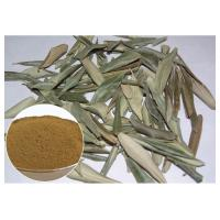 Quality Hydroxytyrosol 20% Pure Olive Leaf Extract , Olive Leaf Powder CAS 32619 42 4 wholesale