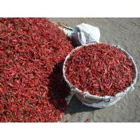 Quality Dried Red Chillies wholesale