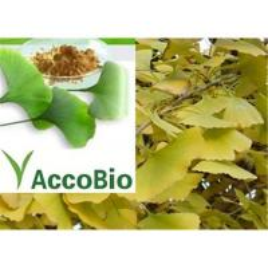 China Ginkgo Biloba extract on sale