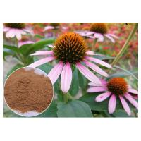 Quality Chicory Acid Antifungal Plant Extracts Echinacea Pururea Powder From Whole Herb wholesale
