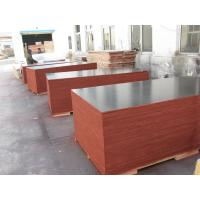 Quality Film Faced Decorative Plywood Sheets 2 Times Hot Press High Strength Design wholesale