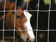 Cheap Fixed Knot Mesh Fence With Galvanized Steel Wire for Horse, Sheep, Cattle for sale