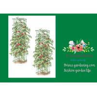"""Quality Heavy Duty Metal Square Tomato Cages With 8"""" Square Openings wholesale"""