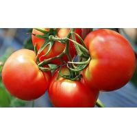 Quality lycopene 5%,Cosmetic,  Improving skin allergies, Tomato Extract,  natural colorant wholesale