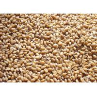 Quality Cereal Color Sorter Machine wholesale