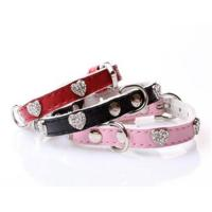 China Dog collars,dog leashes on sale