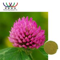 Quality Trifolium Pratense L Red Clover Extract Green Powder Relieve Menopausal Symtoms wholesale
