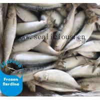 Cheap cheap price frozen sardine for canned sardine fish for sale