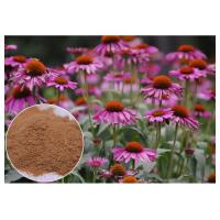 Buy cheap Purple Coneflower Antibacterial Plant Extracts With Chicory Acid Brown Powder from wholesalers