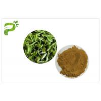 Quality Green Tea Polyphenols Plant Extract Powder 95% For Dietary Supplement Weight Loss wholesale