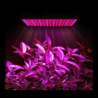 Quality Marijuana Full Spectrum LED Grow Lights Dimmable For Growing Plants Indoors wholesale