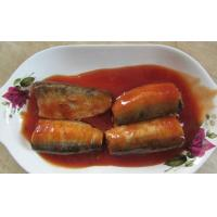 Cheap canned sardine in tomato for sale