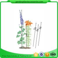 "Quality Single Grow Garden Plant Supports / Spiral Plant Support 4"" Z - Rings wholesale"