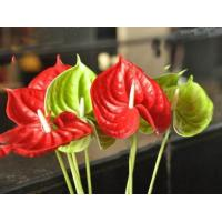 China Artificial flower PU anthurium on sale
