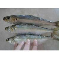 China New Arrive High Quality Whole Frozen Sardine For Market With 4-6pcs/kg Size. on sale