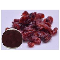 Quality Anti Oxidation PACs Pure Cranberry Extract For Dietary Supplements UV Test wholesale