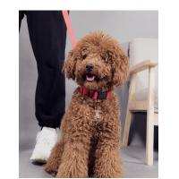 Quality Adjustable Rechargeable Nylon Pets Safety Pet Dog Collar necklace with LED flashing light wholesale