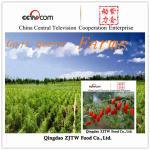 Quality China Goji Berries wholesale
