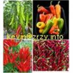 Quality paprika pods,chilli pods wholesale