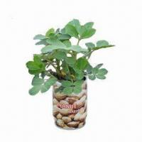 Christmas Gifts, Peanut, Magic Flower/Novelty Plant, Made of Tinplate, Growing Medium and Seeds