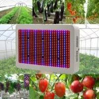 Quality High Tech Dimmable LED Grow Lights Indoor With 50~60Hz Frequency wholesale