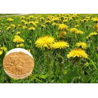 Quality Powerful Antioxidant Natural Dietary Supplements Brown Dandelion Root Extract Powder wholesale