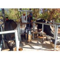 Quality High Efficiency Portable Milking Equipment Single Bucket Milking Machine wholesale