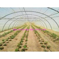 Quality 1.67g/m Industrial Split Film Poly Baler Twine Raw White Color For Tomato Tree wholesale
