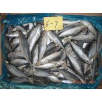 Buy cheap Frozen Horse MACKEREL60-80g from wholesalers