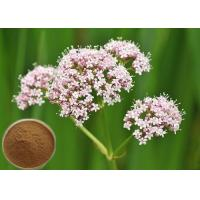 Quality Natural Valerian Root Extract, 0.8% Valeric Acid for Antibacterial and antiviral CAS 8057-49-6 wholesale