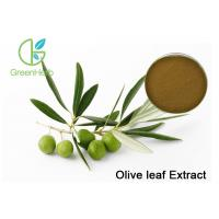Quality Brown Plant Extract Powder , Organic Olive Leaf Extract With 20% Oleuropein Powder Regulate Immunity wholesale